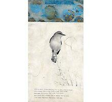 Bird Poem Photographic Print