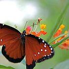 Fluttering Queen by njordphoto