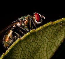 Crouching Fly by Samuel Gundry
