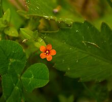 A Dot of Orange by Shane Viper
