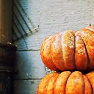 Pumpkins by Silvia Ganora
