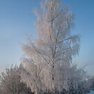 Birch in Winter  by Antanas