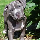 Gorgeous Baby Pitbull Puppy Dog (Head Tilted) by Christy Carlson