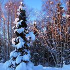 COLD BLUE WINTER SOLITUDE by 1arcticfox