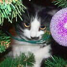 Naughty Kitty in the Christmas Tree by Christy Carlson