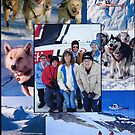 Dog Sledding on a Glacier in Alaska by AnnDixon