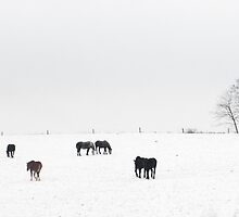 Horses Near Berlin by Billlee