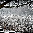 it snowed today...and my mind was at peace with the colorless sky by Tania Palermo