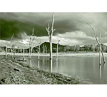 Ghost Tree Cove Photographic Print