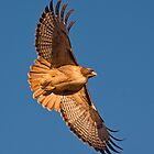 1212097 Red Tailed Hawk by Marvin Collins