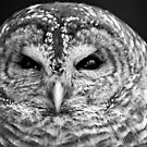 Barred Owl B&W by Flux Photography