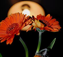 Two flowers...and a half. by Ruth  Jones