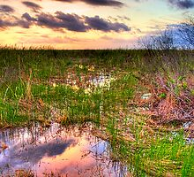 Everglades Twilight by njordphoto