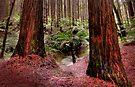 Giant Ferns Dwarfed by annibels