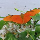 Flame - Dryas Julia by Sharon Perrett