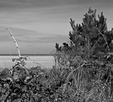 Wells Beach Norfolk, tho' the bushes in monochrome by johnny2sheds