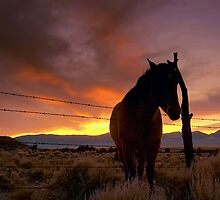 Way Out West by Jeanne  Nations
