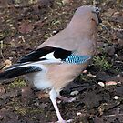 Jay 03 by Sharon Perrett