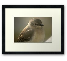Young Gray Vireo Framed Print