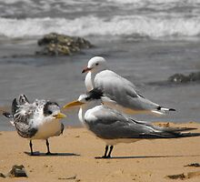Beach birds by lib225