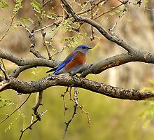 Eastern Blue by Judy Grant