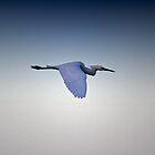 Graceful Flight by Trevor Murphy