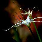 the flower by Alex Mokrzycki