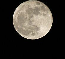 The Moon by Mark Thompson