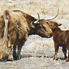 A Mother's Love! by Barb Miller