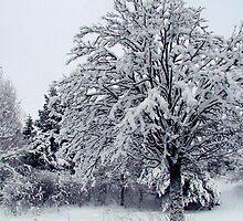 Still in the Snow by Ritva Ikonen