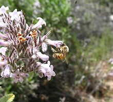 Bee-sy at work by megansim