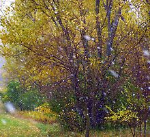 Snow in October- Yellow Tree by JPDesignWorks