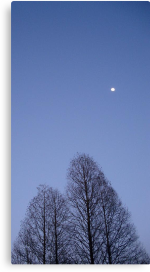 Cypress Trees and the Three Quarter Moon by May Lattanzio