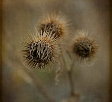 spikes by olivepix