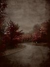 Road To Darkness by Shelly Harris