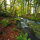 Mountain Stream.Wicklow.Ireland by EUNAN SWEENEY