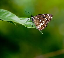 Butterfly by Cathy Middleton