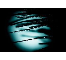 ...blue moon... Photographic Print