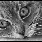 Kitty Cat Face by artbyalycia