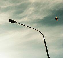 Bird by lagj