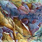 Bark Abstract by Jessica Jenney
