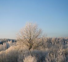 Winter in sunshine by Antanas