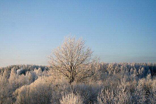 Winter in sunshine by Antanas