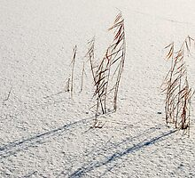 Winter reeds by jchanders
