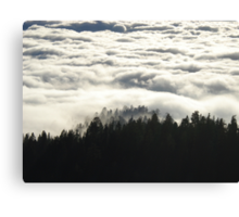 In the Midst of Giants -  Sequoia National Park, California Canvas Print