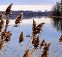 Tranquil Hues by Lynn Armstrong