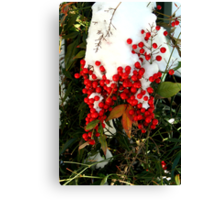 Holly Berries | Nature Canvas Print