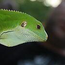 Green Lizard Vanuatu by frenzix