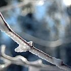 Ice Queen by Julie Moore