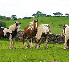 Piebald Horses.Ireland by EUNAN SWEENEY